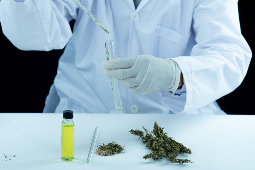 maconha-medicinal